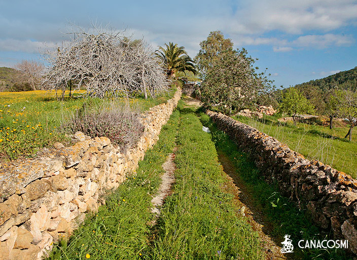 Image locations Ibiza Formentera Countryside 6