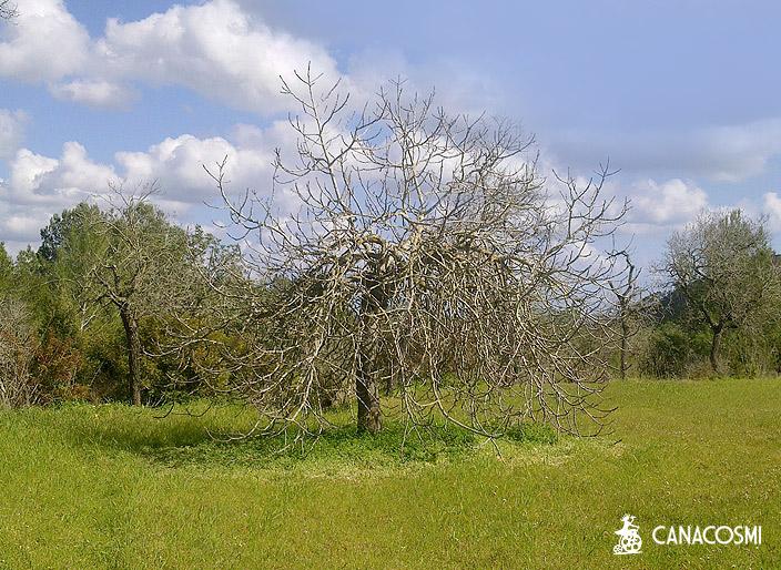localizaciones ibiza formentera campo 9