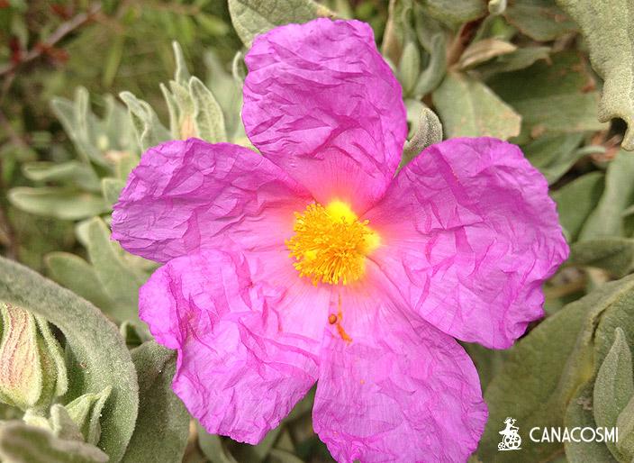 localizaciones ibiza formentera naturaleza frutos y flores